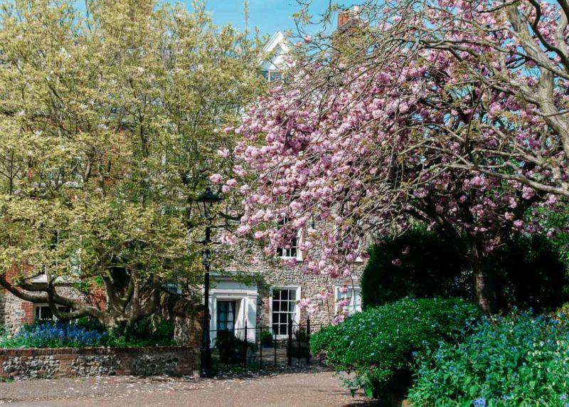 Savitri Wilder: Pretty Norwich